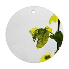Leaves Nature Round Ornament (two Sides) by Nexatart