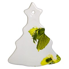 Leaves Nature Christmas Tree Ornament (two Sides) by Nexatart