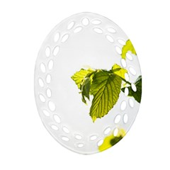 Leaves Nature Ornament (oval Filigree) by Nexatart