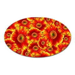 Gerbera Flowers Nature Plant Oval Magnet by Nexatart
