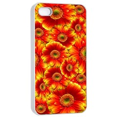 Gerbera Flowers Nature Plant Apple Iphone 4/4s Seamless Case (white)