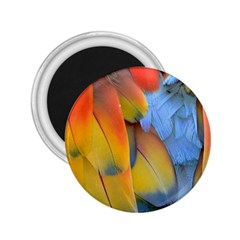 Spring Parrot Parrot Feathers Ara 2 25  Magnets by Nexatart