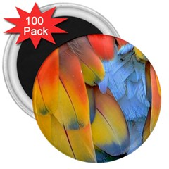 Spring Parrot Parrot Feathers Ara 3  Magnets (100 Pack)