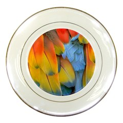 Spring Parrot Parrot Feathers Ara Porcelain Plates by Nexatart