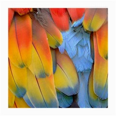 Spring Parrot Parrot Feathers Ara Medium Glasses Cloth by Nexatart