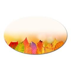 Autumn Leaves Colorful Fall Foliage Oval Magnet by Nexatart