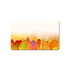 Autumn Leaves Colorful Fall Foliage Magnet (name Card) by Nexatart
