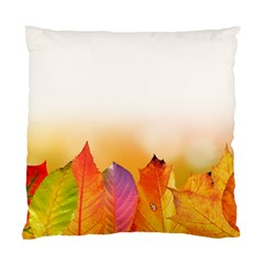 Autumn Leaves Colorful Fall Foliage Standard Cushion Case (two Sides) by Nexatart