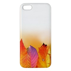 Autumn Leaves Colorful Fall Foliage Apple Iphone 5 Premium Hardshell Case