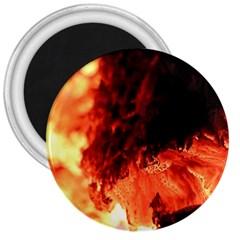 Fire Log Heat Texture 3  Magnets