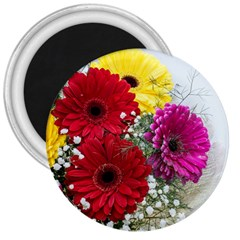 Flowers Gerbera Floral Spring 3  Magnets