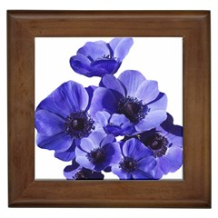 Poppy Blossom Bloom Summer Framed Tiles