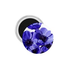 Poppy Blossom Bloom Summer 1 75  Magnets