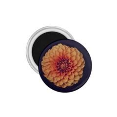 Art Beautiful Bloom Blossom Bright 1 75  Magnets