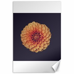 Art Beautiful Bloom Blossom Bright Canvas 24  X 36  by Nexatart