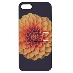 Art Beautiful Bloom Blossom Bright Apple Iphone 5 Hardshell Case With Stand by Nexatart