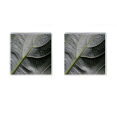Leaf Detail Macro Of A Leaf Cufflinks (square) by Nexatart