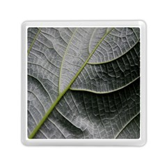 Leaf Detail Macro Of A Leaf Memory Card Reader (square)  by Nexatart