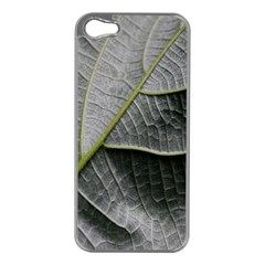 Leaf Detail Macro Of A Leaf Apple Iphone 5 Case (silver) by Nexatart