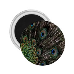 Close Up Of Peacock Feathers 2 25  Magnets by Nexatart