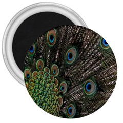 Close Up Of Peacock Feathers 3  Magnets by Nexatart