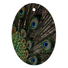 Close Up Of Peacock Feathers Ornament (oval) by Nexatart