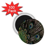 Close Up Of Peacock Feathers 1 75  Magnets (100 Pack)  by Nexatart