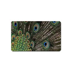Close Up Of Peacock Feathers Magnet (name Card)