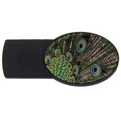 Close Up Of Peacock Feathers Usb Flash Drive Oval (2 Gb) by Nexatart