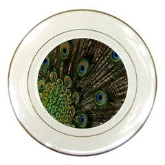 Close Up Of Peacock Feathers Porcelain Plates by Nexatart