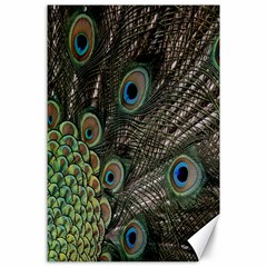 Close Up Of Peacock Feathers Canvas 24  X 36  by Nexatart