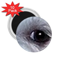Maltese Eyes 2.25  Magnets (10 pack)
