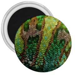 Chameleon Skin Texture 3  Magnets by BangZart