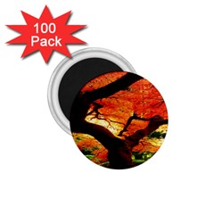 Maple Tree Nice 1 75  Magnets (100 Pack)