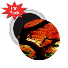 Maple Tree Nice 2 25  Magnets (100 Pack)