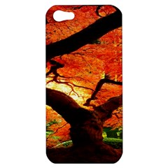 Maple Tree Nice Apple Iphone 5 Hardshell Case by BangZart