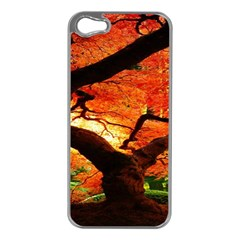 Maple Tree Nice Apple Iphone 5 Case (silver)