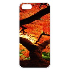 Maple Tree Nice Apple Iphone 5 Seamless Case (white) by BangZart