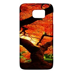 Maple Tree Nice Galaxy S6 by BangZart