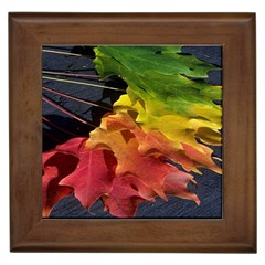Green Yellow Red Maple Leaf Framed Tiles by BangZart