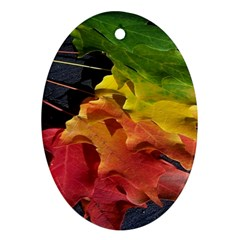 Green Yellow Red Maple Leaf Ornament (oval)
