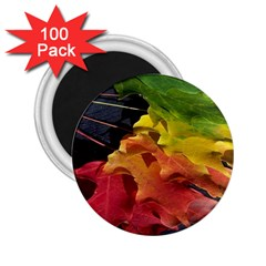 Green Yellow Red Maple Leaf 2 25  Magnets (100 Pack)