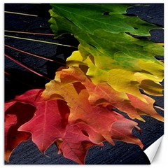 Green Yellow Red Maple Leaf Canvas 16  X 16