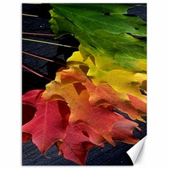 Green Yellow Red Maple Leaf Canvas 18  X 24   by BangZart