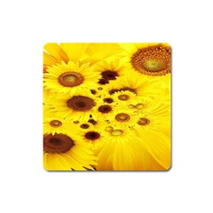 Beautiful Sunflowers Square Magnet by BangZart