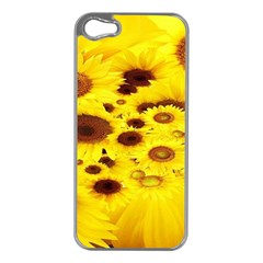 Beautiful Sunflowers Apple Iphone 5 Case (silver)