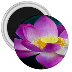 Pink Lotus Flower 3  Magnets
