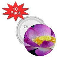 Pink Lotus Flower 1 75  Buttons (10 Pack) by BangZart