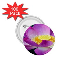 Pink Lotus Flower 1 75  Buttons (100 Pack)  by BangZart