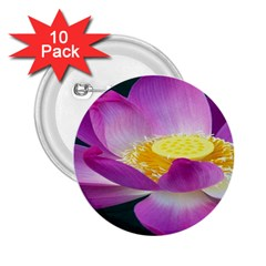 Pink Lotus Flower 2 25  Buttons (10 Pack)  by BangZart